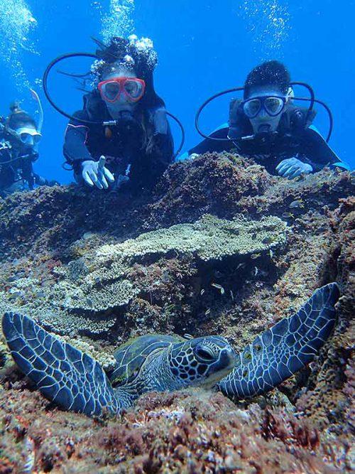 キレイに収まるアオウミガメ