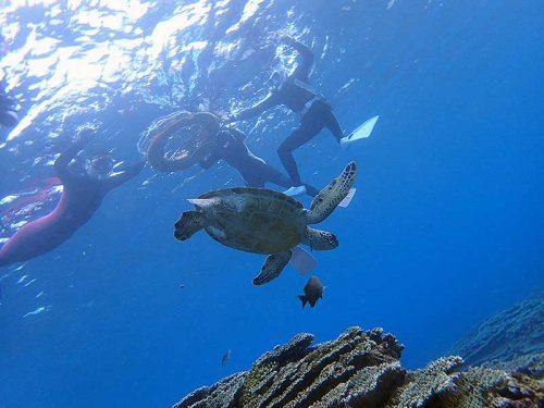 上からウミガメみんなで眺め