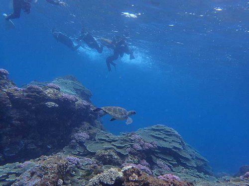前からウミガメ泳いできてたり
