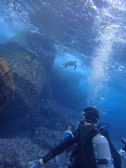 集まるウミガメ見てみたり