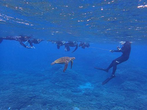 呼吸しに上がってきていたアオウミガメ