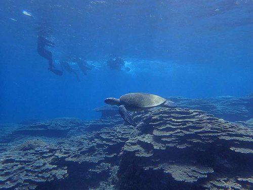 大きなウミガメ泳いでいたり