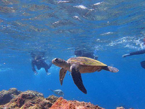 ウミガメ達を見て周り