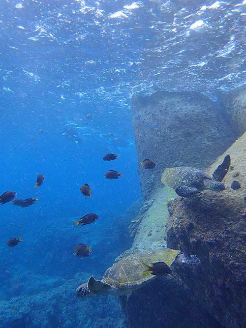 テトラに近くにはたくさんウミガメ集まってたり