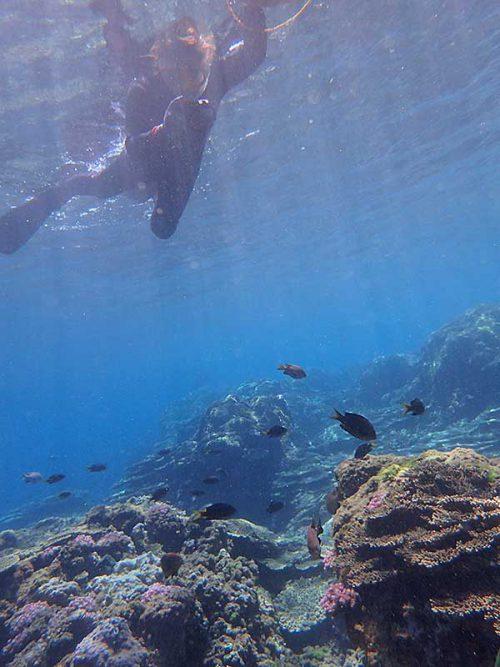 浅場に集まる魚も見ながら泳いで行って