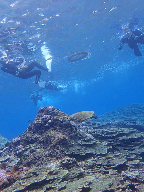 のんびりしてたウミガメ見に行き