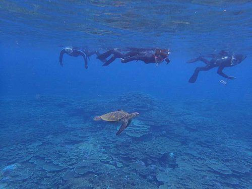 ウミガメ見ながら戻ってきて