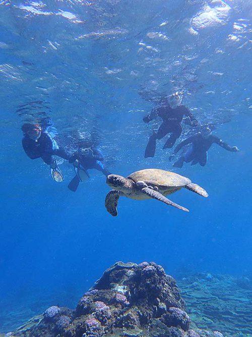 のんびり浮いてるアオウミガメ
