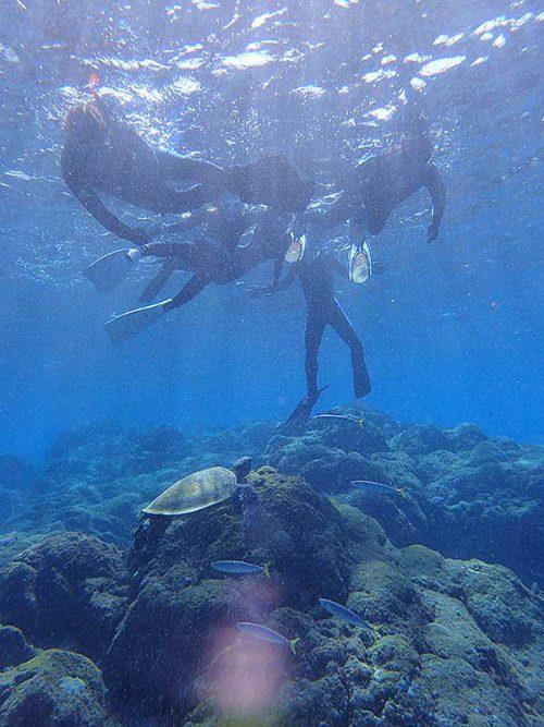 ウミガメ見てたらムロアジ来たり