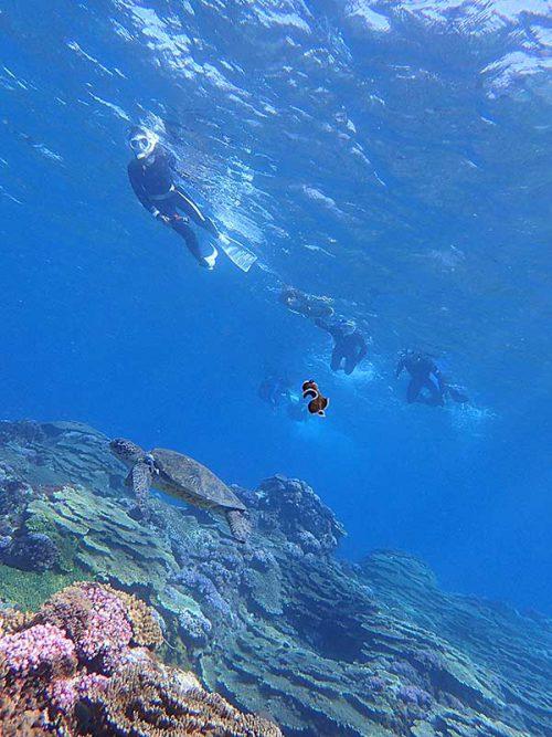 ウミガメ近くでヒラムシ浮いてたり