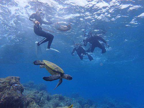 ちょっと泳げばすぐにウミガメおりまして