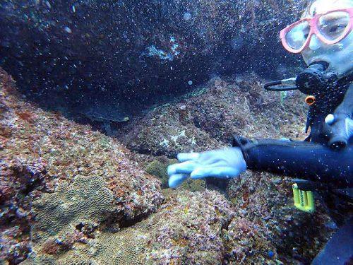 岩の隙間に隠れてたアオウミガメ