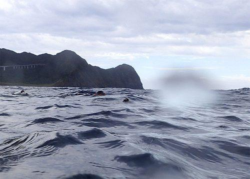 ポコッと顔出すアオウミガメ
