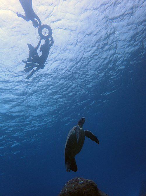 ちょっと大きなウミガメ見たり