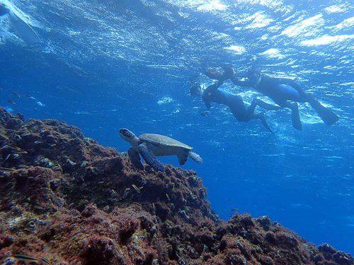 ちょっと小ぶりなウミガメ見たり