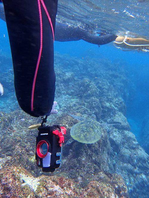海草食べてたアオウミガメ