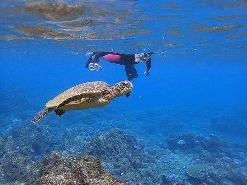 じっくり近くでウミガメ見たり