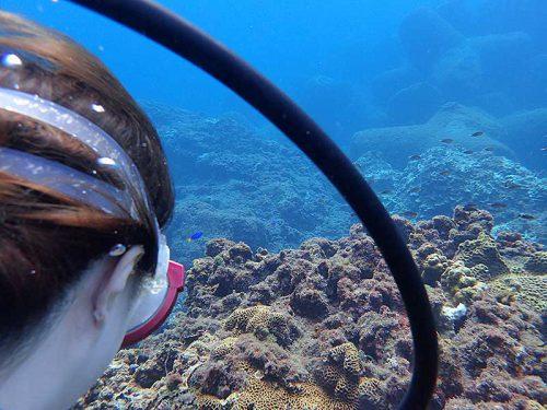 魚見ながらゆっくり潜り
