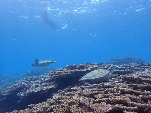 サンゴの隙間で休憩していたウミガメとか