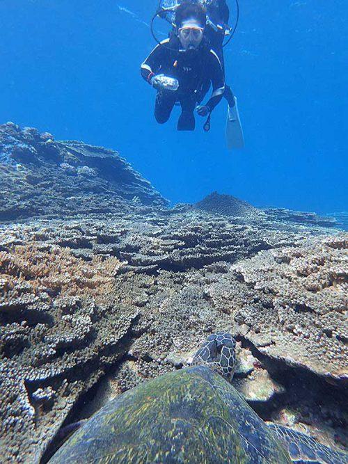 サンゴの合間で休憩中のアオウミガメ