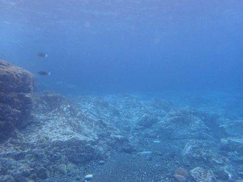 さっぱりしてる海底で