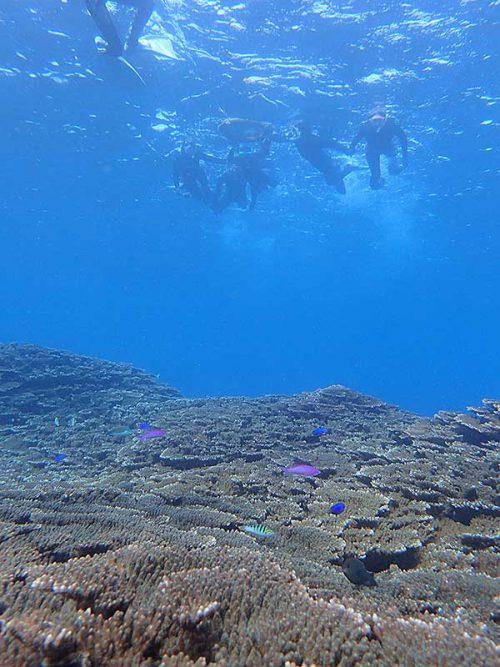 サンゴ上にはソラスズメダイとかハナゴイとか