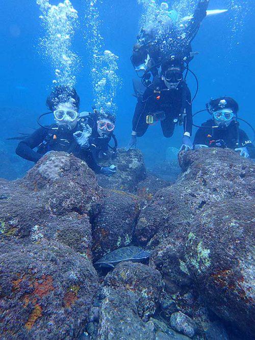 隙間で休むアオウミガメ