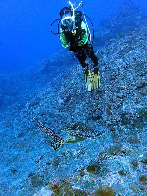 八重根でウミガメたくさん見たり