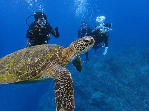 アオウミガメと一緒に泳いで周って行ったり