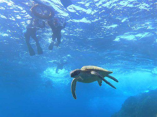 ウミガメ近くで見てみたり