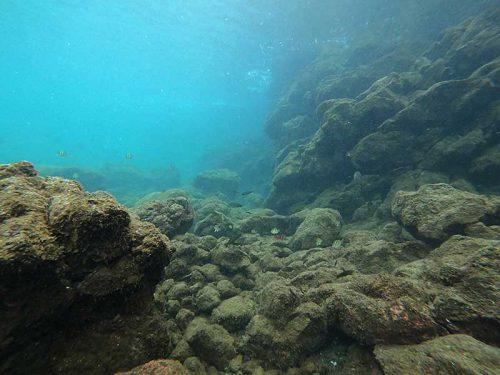 汽水域にはちっこい魚がわさわさしてて