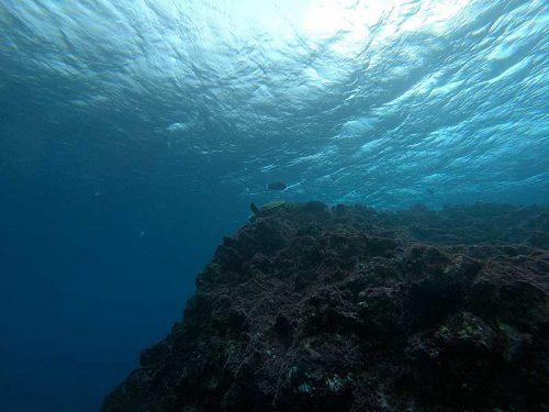 根上にはアオウミガメ