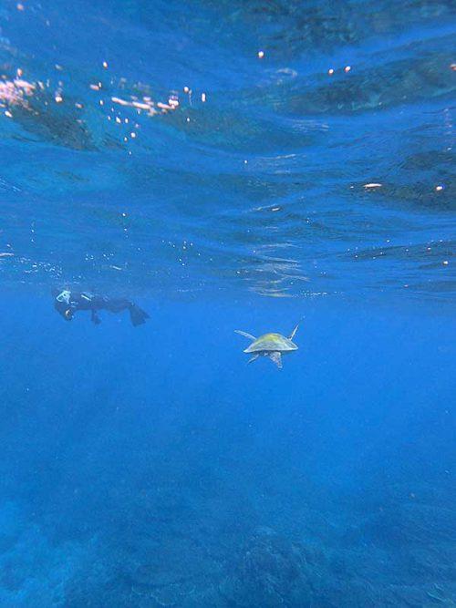 横切るウミガメ眺めてみたり