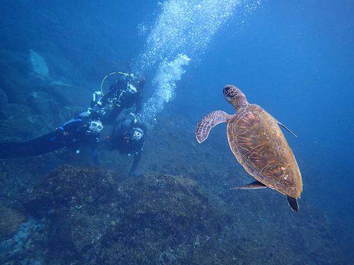 潜るとすぐにウミガメ見つけ