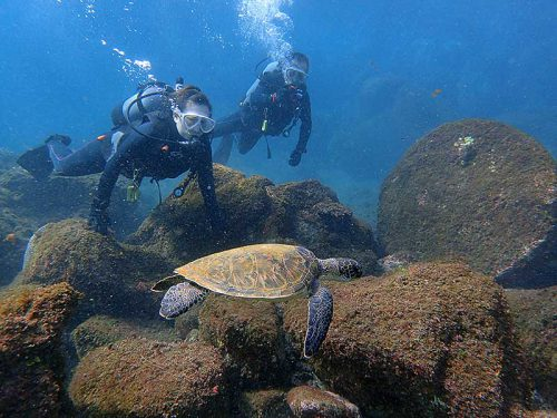ウミガメと一緒に体験ダイビング