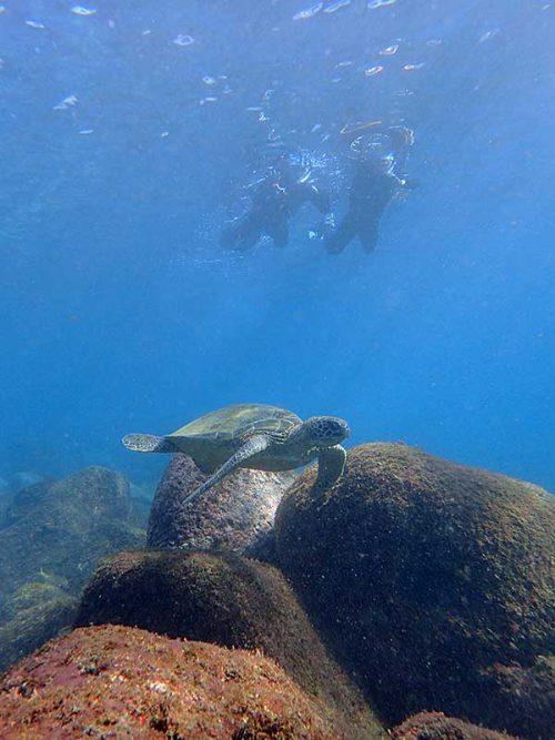 泳いですぐにウミガメ見かけ