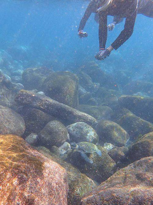 上からウミガメ撮ったり見たり