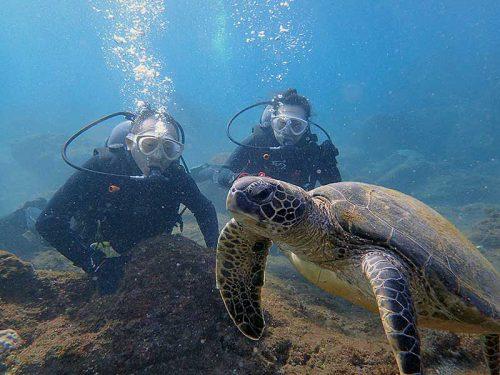潜ればすぐにおウミガメ見かけ