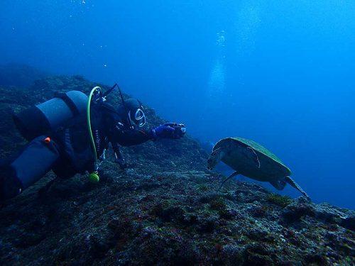 アオウミガメとか撮りつつ泳ぎ