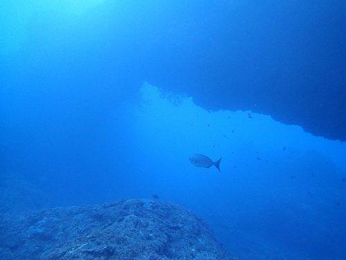 沖からクジラの声も微かに聞こえてきていたり