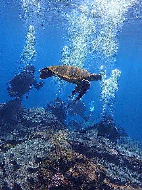 ウミガメ見ながら体験ダイビング