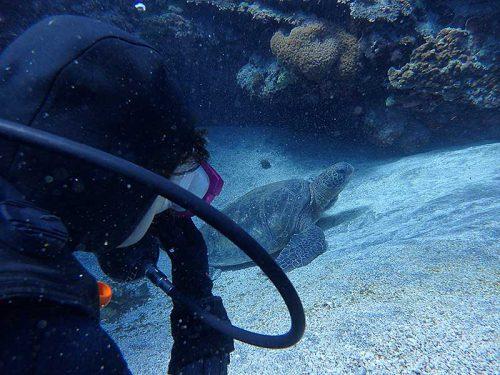 砂地で休むアオウミガメ