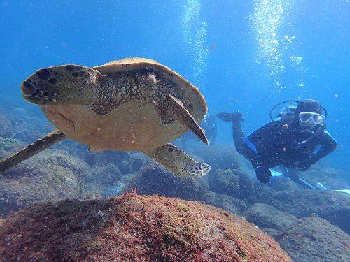 潜ればすぐにウミガメ見かけ
