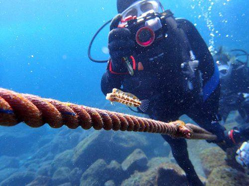 ロープについてたニジギンポ