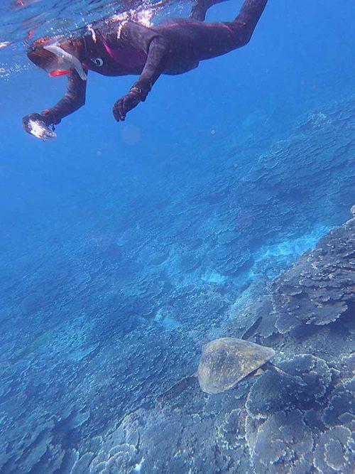 真下をウミガメ泳いで行ったり
