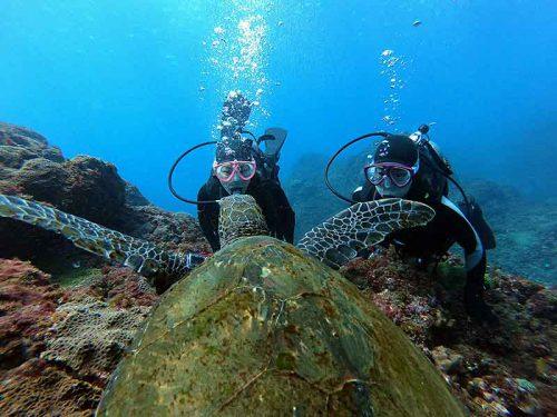 泳げばたくさんウミガメ見かけ