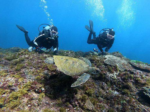 ウミガメと一緒にちょっと泳いでみたり