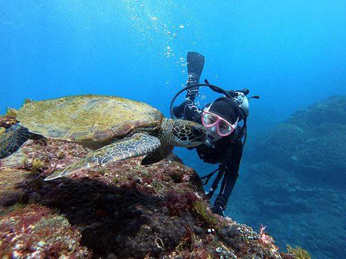 ウミガメじっくり近くで見たり