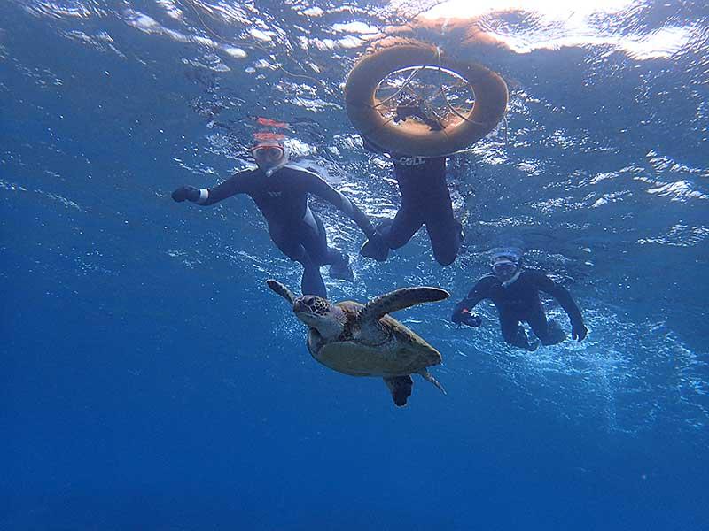 少し泳いでウミガメ見たり