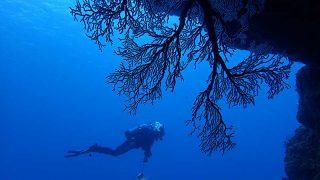 寒さが続く八丈島、落ち着いてきていた八重根で【ダイビング】